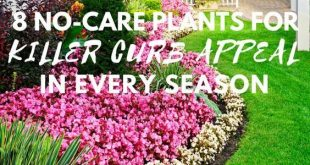 8 No-Care Plants for Killer Curb Appeal in Every Season