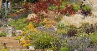 Landscaping with drought, fire, rain and runoff in mind