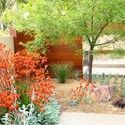 Garden ideas, landscape ideas, Drought Tolerant, Full Sun, Part sun, Mediterrane...