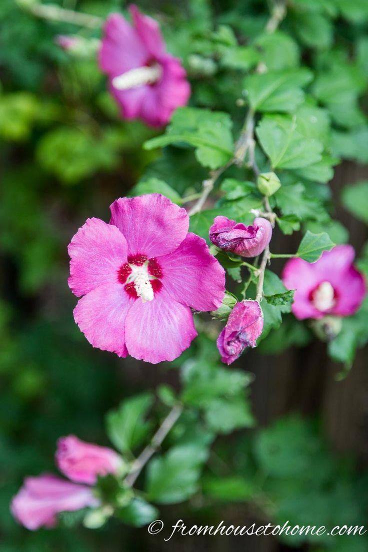 Full Sun Perennials: 10 Beautiful Low Maintenance Plants ...