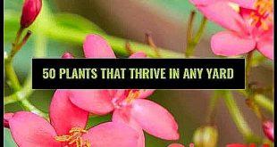 25 No-Effort Plants for a Foolproof Landscape Low #bob #Foolproof #Ideas #lands...