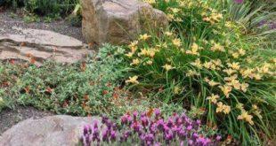30+ Ideas Low Maintenance Landscape Front Yard Curb Appeal Simple