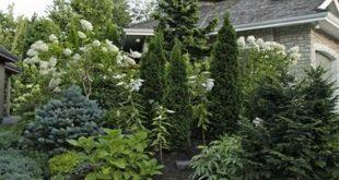 50 Ideen für immergrünen Landschaftsgarten auf Ihrem Vorgarten