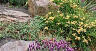 56+ Trendy low maintenance landscape ideas front yard shrubs drought tolerant