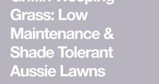 Griffin Weeping Grass: Low Maintenance & Shade Tolerant Aussie Lawns