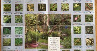 Gärtnern mit einheimischen Pflanzen in Portland Oregon Ein wunderschönes Diagr...