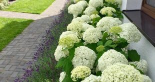 Landscaping ideas for front yards and backyards should not be ignored.