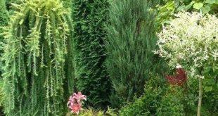 Nadelbaum Garten Ideen 2 große Nadelbäume, aber unterschiedliche Texturen schöne Nadelbaum
