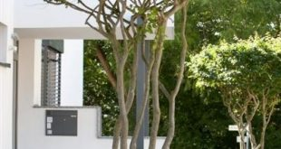 Toller Baum für den Vorgarten. Die Schirmform der Baumkrone sollte definitiv in