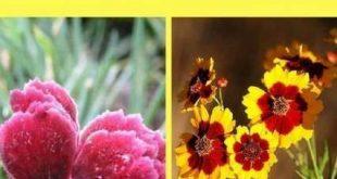 Wartungsarme Landschaft Vorgarten voller Sonne Frühling 58 super Ideen